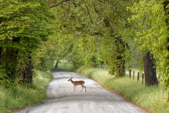 Wildlife Conservation Awareness - Animals Appreciate Recent Traffic Lull