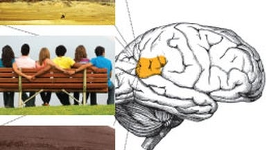 One Brain Area Processes Time, Space and Social Relationships
