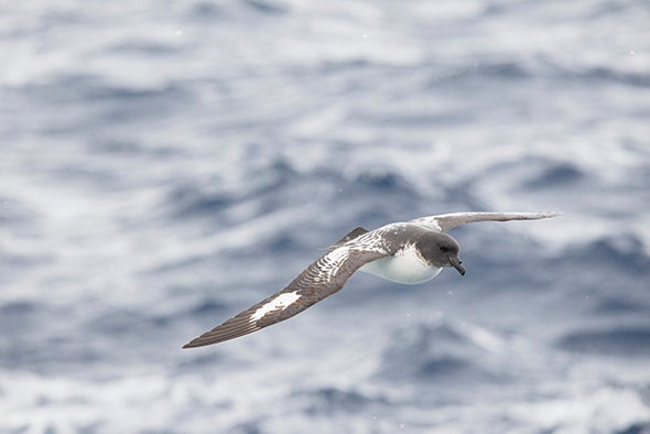 Skeptics Poke Holes in Claim That Birds Mistake Plastic for Food