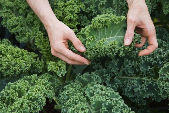 What's in Kale (or a Pear) that Seems to Lower Alzheimer's Risk?