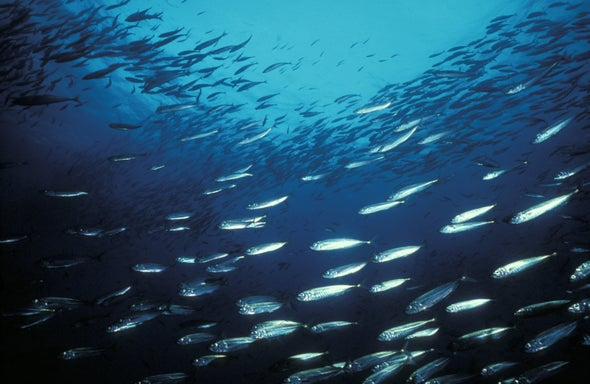 Ocean Species Are Shifting toward the Poles