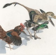"""Missing Links"" Found between Birds and Dinosaurs"