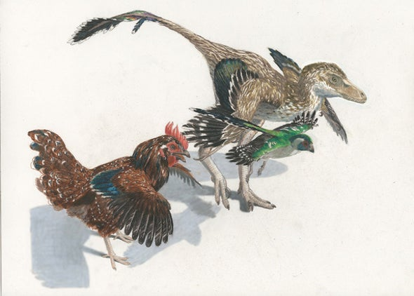 """""""Missing Links"""" Found between Birds and Dinosaurs"""