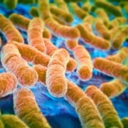 Why Are Some <i>E. Coli</i> Strains Deadly While Others Live Peacefully in Our Bodies?