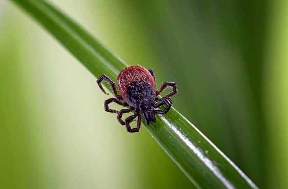 Ticks Carry Lyme Disease in Almost Half of U.S. Counties