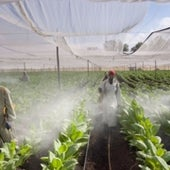Fungicide Sprayers: