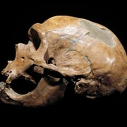 Neandertal DNA Affects Modern Ethnic Difference in Immune Response