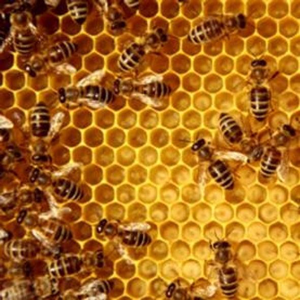 You Have A Hive Mind Scientific American