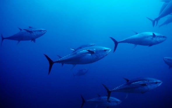 U.N. Makes a Bold Move to Protect Marine Life on the High Seas