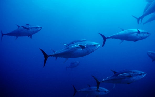 U.N. Makes a Bold Move to Protect Marine Life on the High Seas