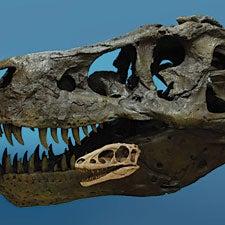 Tiny tyrannosaurs rewrite evolutionary rules