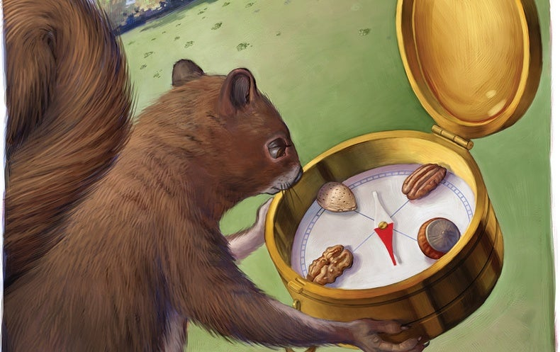 Squirrels Can Store the Same Kinds of Nuts in Specific Groupings