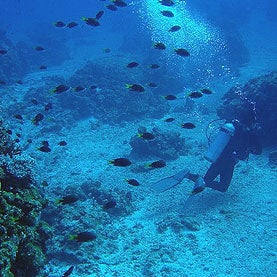 Scientists Deploy Underwater Observatory to Track Warming, Acidification