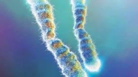 My, What Long Telomeres You Have