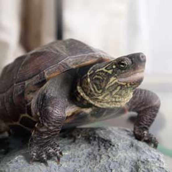 Unhatched Turtles Move within Eggs to Beat the Heat