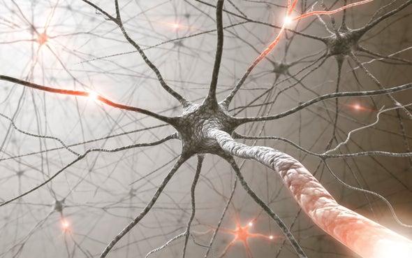 """Movement Maps"" Found Deep inside Brain"
