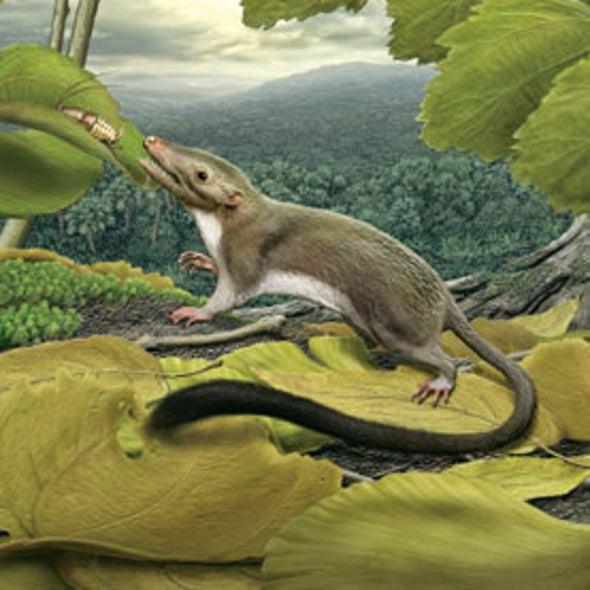 Meet the First Placental Mammal