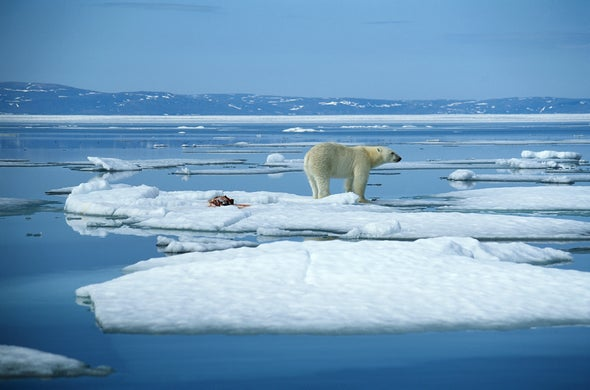 Polar Bears Must Work Harder on Faster Sea Ice Treadmill