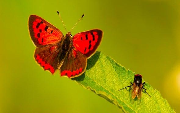 City Life Favors Downsized Invertebrates