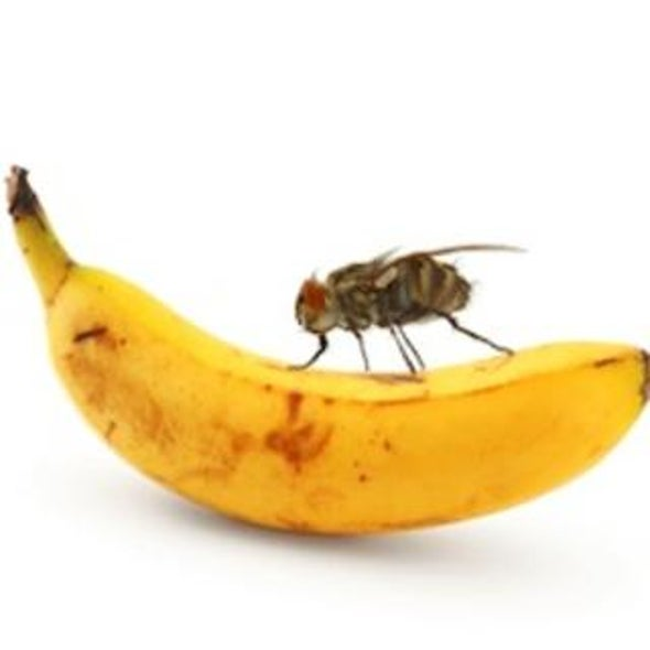 Sating the Ravenous Brain: Researchers Quell Hunger Neurons in Fruit Flies