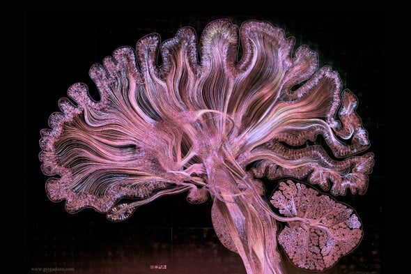 Watch the Human Brain Come to Life in This Stunning Piece of Art