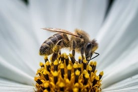 Surprise: Bees Need Meat
