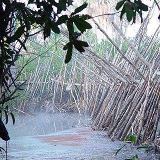 Ancient Amazon Actually Highly Urbanized