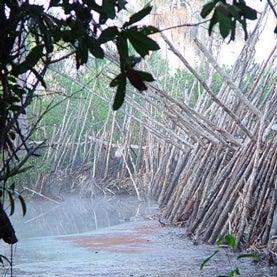 amazon-fish-dam