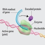 Epigenetics Explained [Animation]