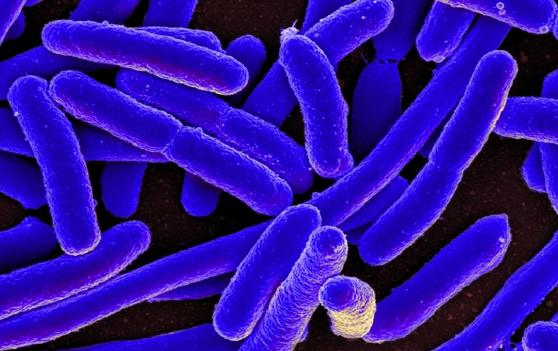 Superbug Resistant to 2 Last-Resort Antibiotics Found in U.S. for First Time