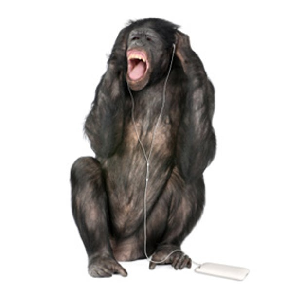 Chimps Experience Synesthetic Sense-Intermingling, Like Humans Do