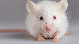 "Researchers Enable ""Super Mice"" to See Near-Infrared Light"