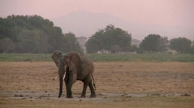 Maasai lease ancestral land to elephants