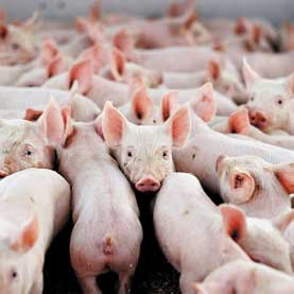 From Fields to Fevers: Are Farms Breeding Deadly MRSA Infections?