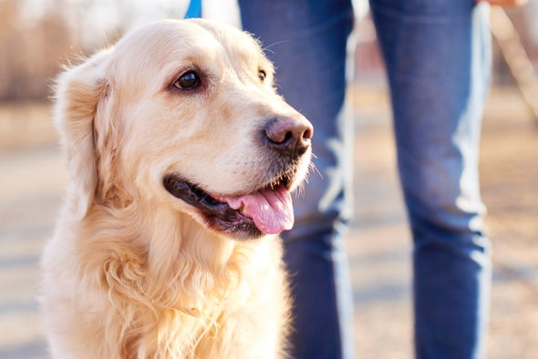 Do Dogs Have Mirror Neurons?