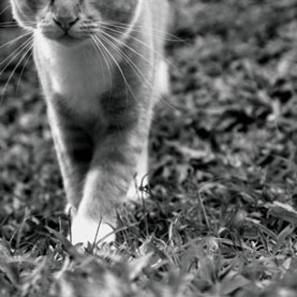 Where House Cats Roam: Researchers Compare the Mysterious Wanderings of Pet and Stray Felines
