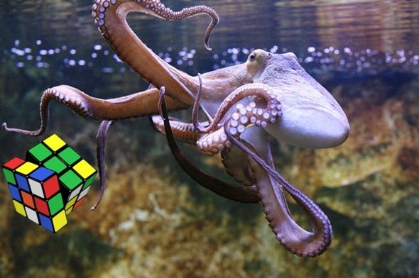 Rubik's Cube to Reveal Octopus Handedness