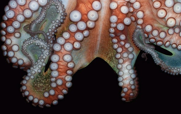 "Octopus-Inspired Robots: Silicone Skin Can Change Texture for ""3-D Camouflage"""