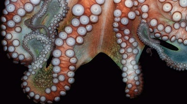 Octopus-Inspired Robots: Silicone Skin Can Change Texture for