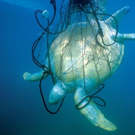 Ultraviolet Illumination Warns Sea Turtles away from Fishing Nets