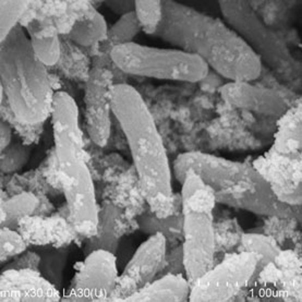 How Microbes Can Build Electric Grids