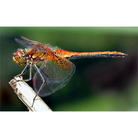 The Dragonfly Swarm Project