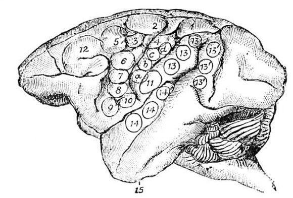 What Makes A Human Brain Unique Scientific American