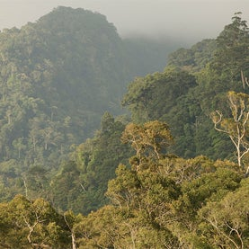 Can Disney's New Paper Rules Help Save the Rainforests?