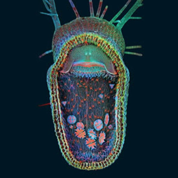 Life under the Microscope: Stunning Photographs from the BioScapes Competition [Slide Show]