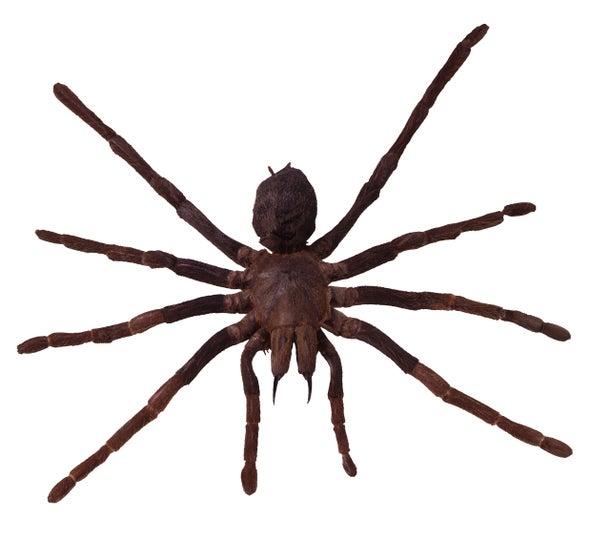 Spiders Gobble Gargantuan Numbers of Tiny Prey