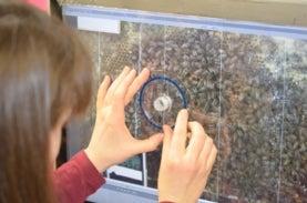 imagen de una pantalla de computadora que muestra una imagen de las abejas, con las manos de una persona sosteniendo un transportador de ángulos en la pantalla