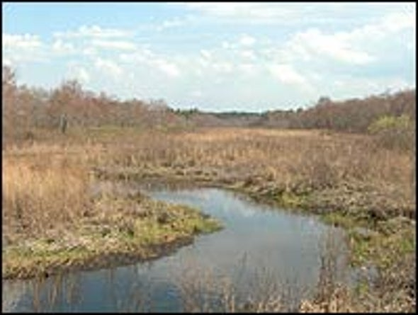 The End of the Everglades?