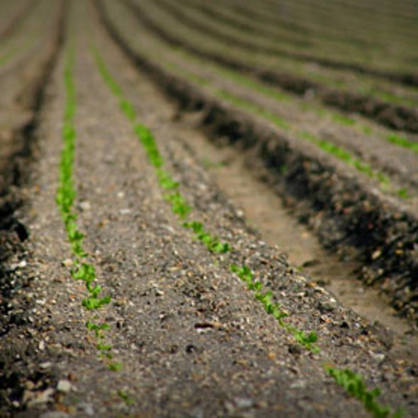 Scientists Overestimate Ability of Soil to Store Carbon