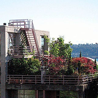 Advice on Creating a Rooftop Garden
